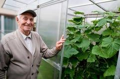 Uomo anziano sorridente nel suo proprio giardino fotografia stock libera da diritti