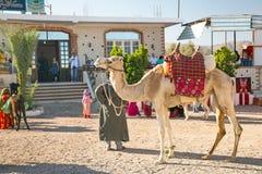 Uomo arabo con il cammello nell'Egitto Fotografia Stock Libera da Diritti
