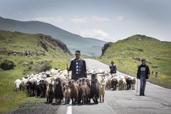 Uomo armeno con le sue pecore in una campagna fotografia stock libera da diritti