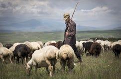 Uomo armeno con le sue pecore in una campagna immagine stock