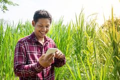 Uomo asiatico che utilizza smartphone nell'agricoltura Fotografie Stock Libere da Diritti