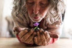 Uomo barbuto anziano che tiene un fiore in sue mani Fotografia Stock Libera da Diritti