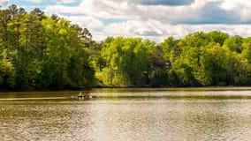 Uomo in barca della squadra sulla rematura del lago con gli alberi nei precedenti fotografia stock