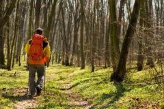 Uomo in buona salute attivo che fa un'escursione nella bella foresta fotografia stock