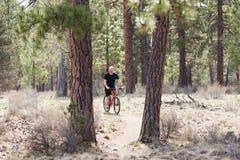 Uomo calvo che guida un mountain bike su una traccia della sporcizia nella foresta Fotografie Stock