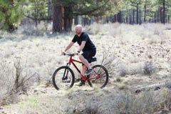Uomo calvo che guida un mountain bike su una traccia della sporcizia nella foresta Fotografia Stock