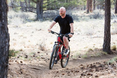 Uomo calvo che guida un mountain bike su una traccia della sporcizia nella foresta Immagini Stock Libere da Diritti