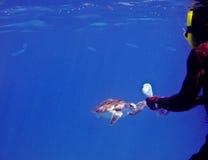 Uomo che alimenta una tartaruga di mare verde Fotografie Stock