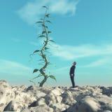 Uomo che ammira un grande gambo di una pianta di fagioli Fotografia Stock
