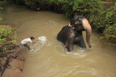 Uomo che bagna un elehpant, Sri Lanka Fotografia Stock Libera da Diritti