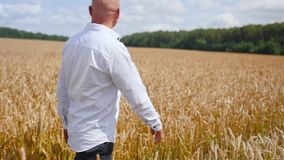 Uomo che cammina attraverso il giacimento di grano dorato Colpo medio video d archivio