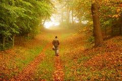 Uomo che cammina attraverso il terreno boscoso immagini stock libere da diritti