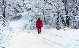Uomo che cammina attraverso la foresta nevosa fotografie stock libere da diritti