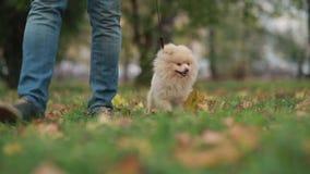 Uomo che cammina con il cane stock footage
