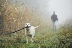 Uomo che cammina con il cane in nebbia di autunno fotografia stock