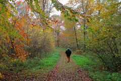 Uomo che cammina da solo nella foresta di autunno Immagini Stock