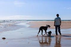 Uomo che cammina i suoi cani Immagini Stock Libere da Diritti