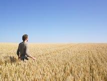 Uomo che cammina nel campo di frumento Fotografie Stock