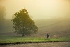 Uomo che cammina nel paesaggio nebbioso nebbioso Immagini Stock