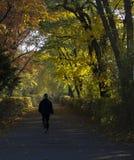 Uomo che cammina nel vicolo del parco fotografia stock