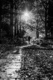 Uomo che cammina nella scena del autmun Fotografie Stock Libere da Diritti