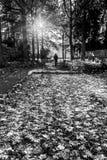 Uomo che cammina nella scena del autmun Fotografia Stock Libera da Diritti