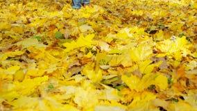 Uomo che cammina sulle foglie di autunno stock footage