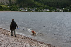 Uomo che cammina un 3Legged praticante il surfing Labrador Immagini Stock Libere da Diritti