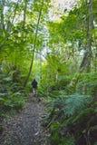 Uomo che cammina in una foresta Immagini Stock