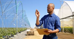 Uomo che conta le piante nell'azienda agricola 4k del mirtillo stock footage