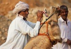 Uomo che controlla il cammello Immagine Stock