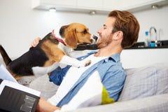 Uomo che esamina lavoro di ufficio e che gioca con il cane di animale domestico a casa fotografia stock libera da diritti