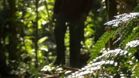 Uomo che fa un'escursione camminata nella giungla di aria aperta stock footage