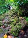 Uomo che fa un'escursione nei tropici Fotografia Stock
