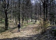 Uomo che fa un'escursione nel legno Fotografia Stock