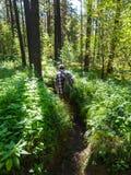 Uomo che fa un'escursione nel legno dopo che la pioggia fermata ed il sole ora splende attraverso la foresta Fotografia Stock Libera da Diritti