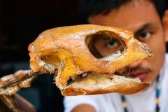Uomo che fissa alle ossa della tartaruga di mare Immagini Stock