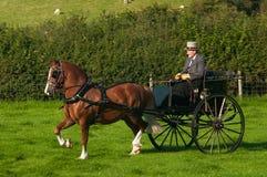 Uomo che guida cavallo e carrello Immagine Stock