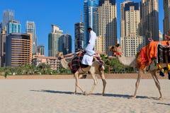 Uomo che guida un cammello sulla spiaggia Fotografia Stock