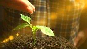 Uomo che innaffia una pianta, movimento lento, concetto di sviluppo di agricoltura, ecologia stock footage