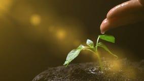 Uomo che innaffia una pianta, movimento lento, concetto di sviluppo di agricoltura, ecologia video d archivio