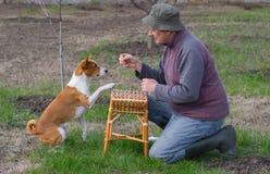 Uomo che insegna a cane astuto di basenji ai trucchi semplici Immagini Stock Libere da Diritti