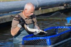 Uomo che lavora all'impresa di piscicoltura Immagine Stock Libera da Diritti