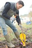 Uomo che martella indicatore in giardino Fotografia Stock