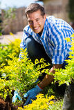 Uomo che pianta arbusto Fotografia Stock Libera da Diritti