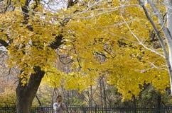 Uomo che prega da solo un giorno dell'autunno Immagine Stock