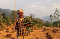 Uomo che raccoglie i foraggi Fotografia Stock Libera da Diritti