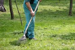 Uomo che rastrella erba di recente tagliata Fotografie Stock