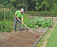 Uomo che rastrella giardino Immagine Stock