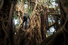 Uomo che scala un albero enorme fotografia stock